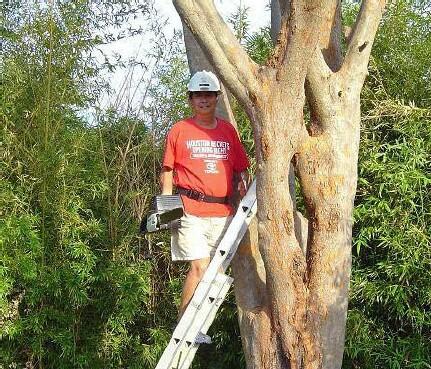 Urban Lumberjack                   Frank